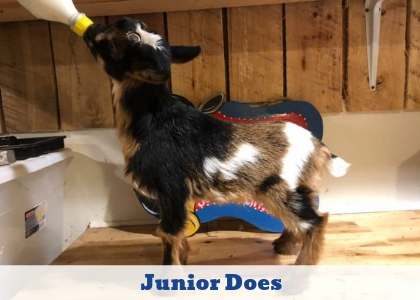 Click here to explore Junior Does